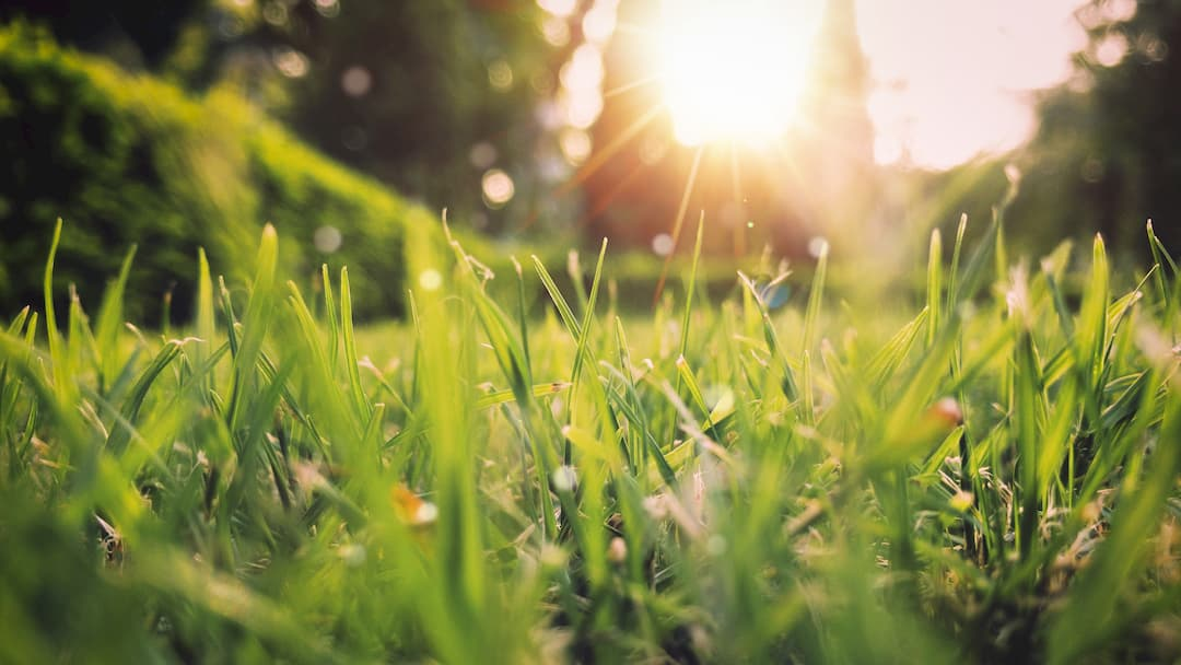 exteriores de un jardín con césped al que le da el sol en una tarde de primavera